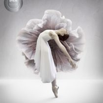 silver distinction bella